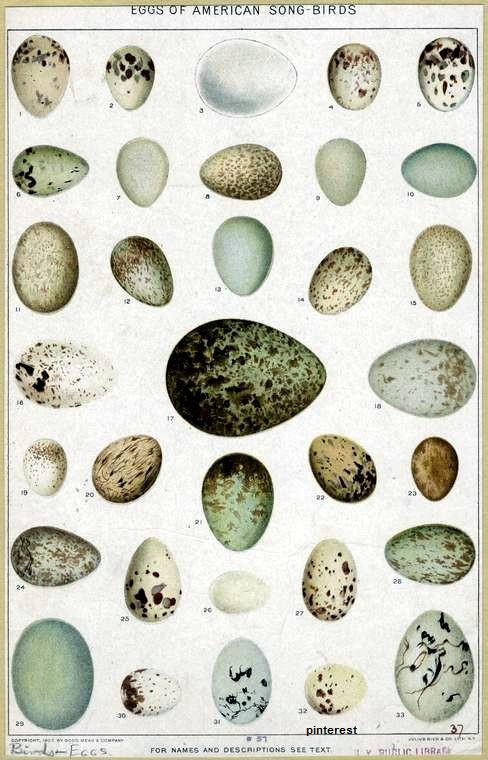 Animal Bird Eggs 1